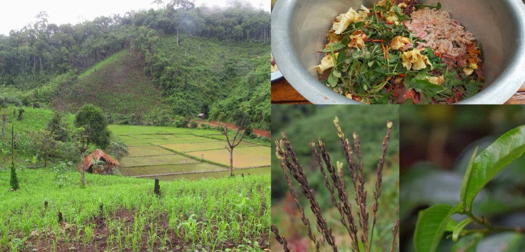 Karen Rotational Farming, Thailand, 2017